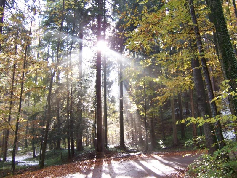 Bild:Sonne im Herbstwald.JPG